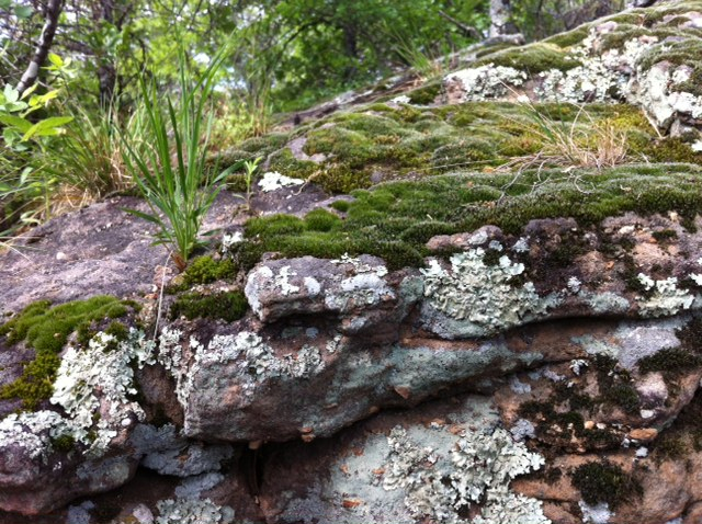 moss on rock at mineral wells state park